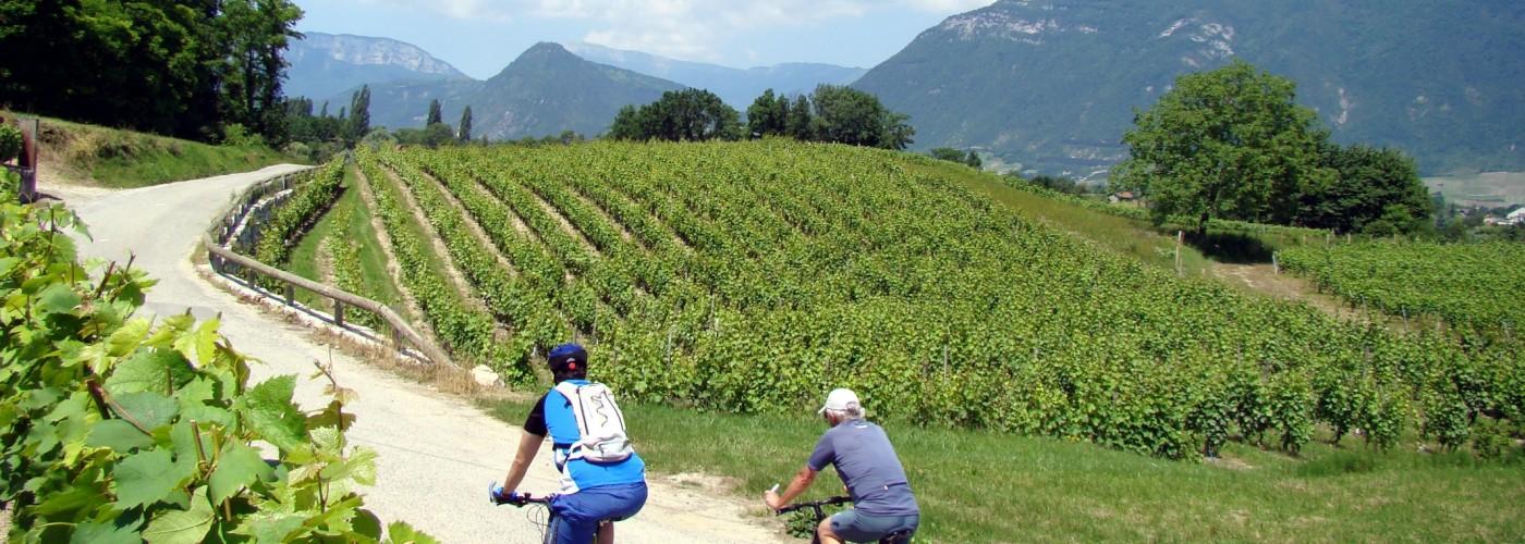 Balade en VTT dans le vignoble en Savoie